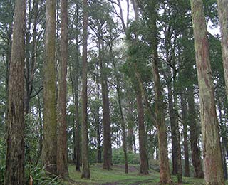 Mt-Dandenong-Bushwalks
