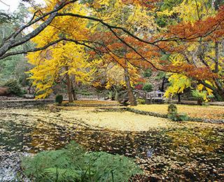 Dandenongs-Alfred-Nicholas-Gardens