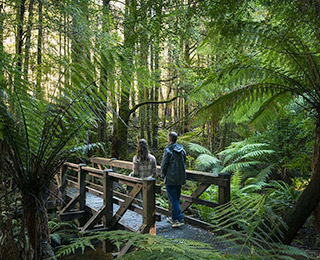attraction places dandenong