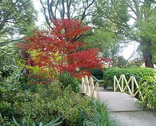 SkyHigh-Gardens