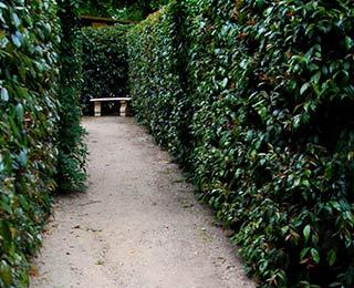 skyhigh maze